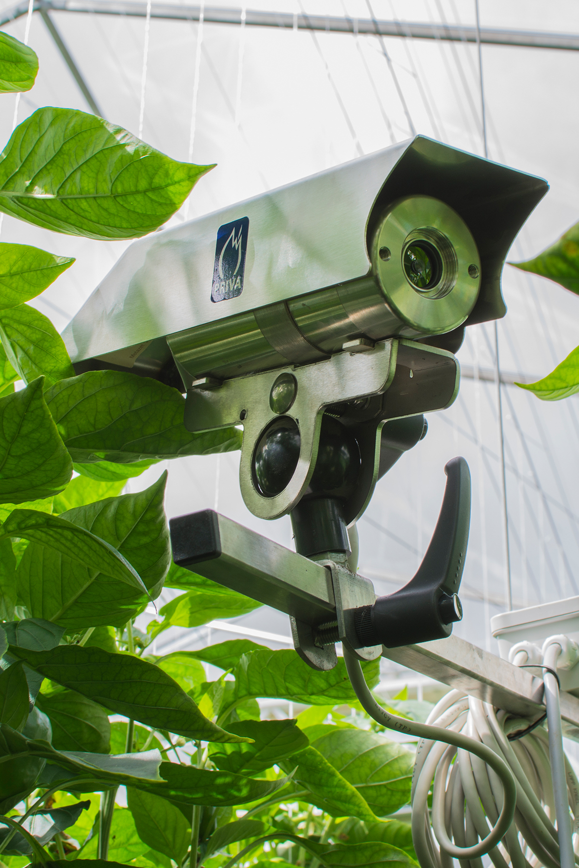 A camera that monitors the growing peppers at Tangmere Airfield Nurseries.