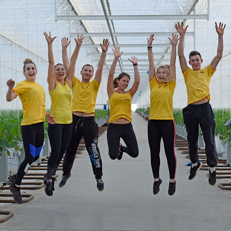 6 employees jumping for joy in yellow tshirts at Tangmere Airfield Nurseries.